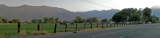 View from our driveway, looking southwest toward the mountains. The neighbors like to eat grass.