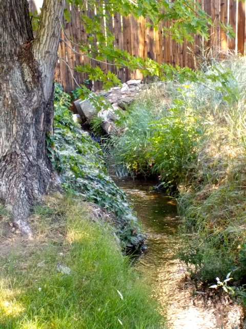 ... fed by this little irrigation ditch behind the trees.