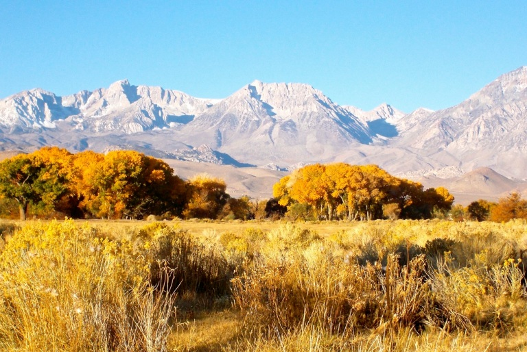 Fall colors are all over Bishop right now!