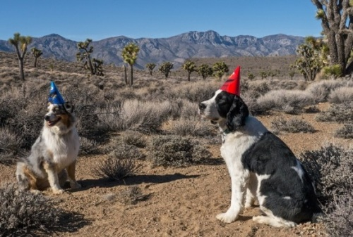 Bean and Einstein were looking sharp in their pointy party hats. Happy Birthdays for all!