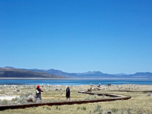 Boardwalk takes across Mono Lake's wetland shoreline.