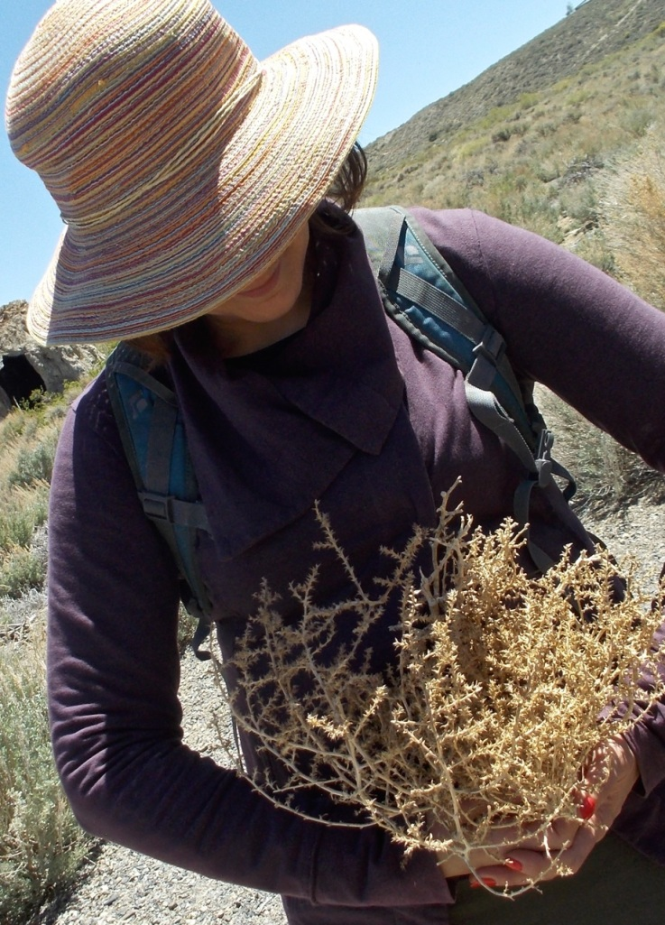Still life with Russian thistle (tumbleweed), Mono Lake.