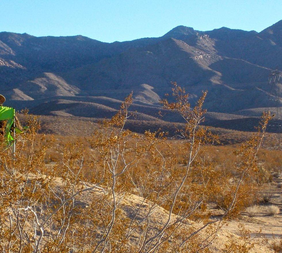 Mojave Desert Native Plants: Mojave Desert