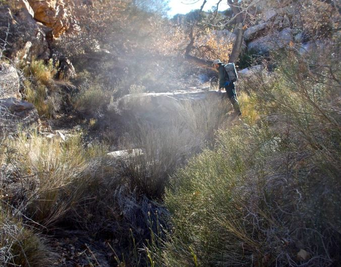 Perennial water in Bighorn Basin makes for thick brush in places, including cottonwood, catclaw acacia, baccharis, grasses, and other shrubs.